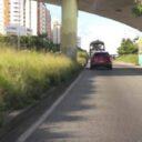 Piden poda  en la autopista