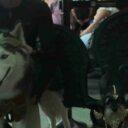 Desfile de mascotas