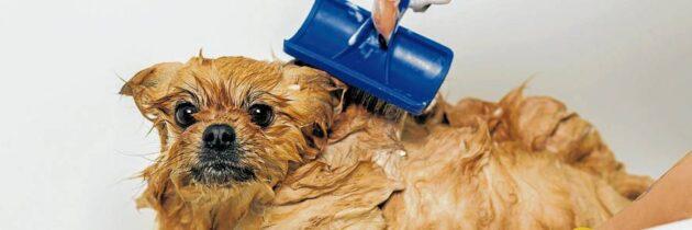 Ectoparásitos,un molesto problema  para la mascota y sus dueños