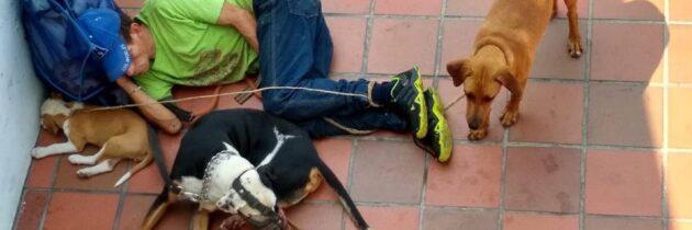 Advierten posible  maltrato de perros