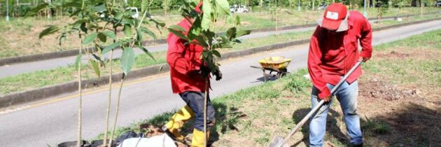 Apadrine un árbol y contribuya con el medio ambiente