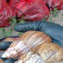 Reaparecen los caracoles en El Bosque