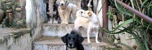 Dónele a los animalitos o adopte uno