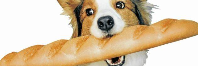 Conozca cómo el pan afecta la salud de su mascota