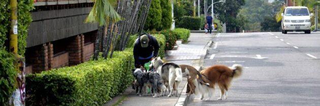 Mala disposición de heces de las mascotas, una amenaza para la salud