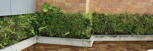 Jardines de Caracolí  reciben mantenimiento