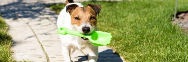 Bolsas biodegradables, una opción para las heces de sus mascotas