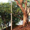 Peligroso  tronco