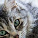 Hábitos saludables  para cuidar a su gato