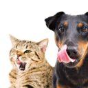 Gatos vs Perros: Diferencias en las necesidades nutricionales